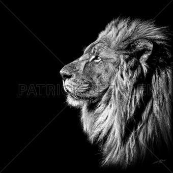 King Of Kings (König der Könige)